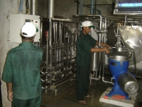 Milk Pasteurization on H.T.S.T.Plant